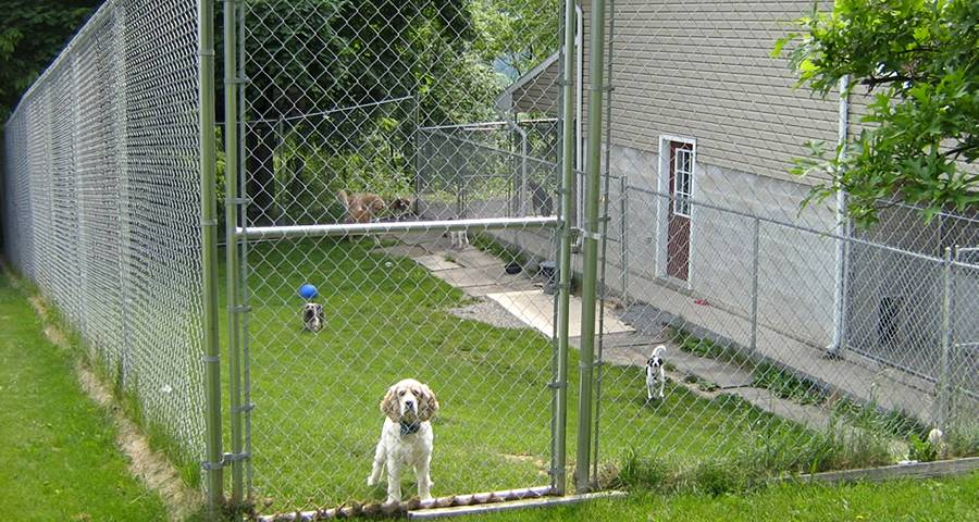 Chain Link Dog Fence Offers A Safety Comfortable Place For
