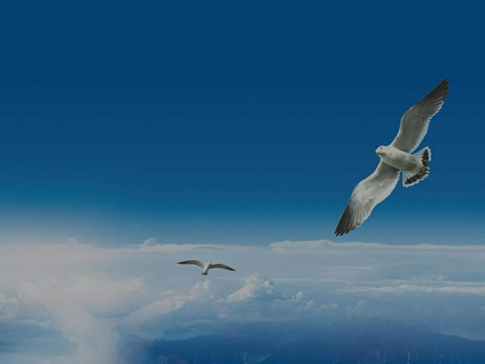 Two seagulls are flying in the blue sky, mission statement words on the picture.