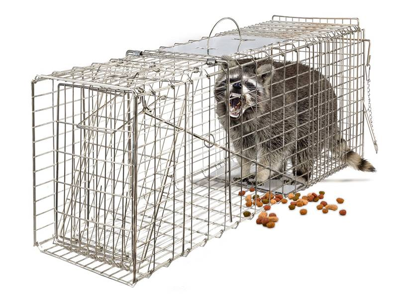 An animal cage with a raccoon in it.