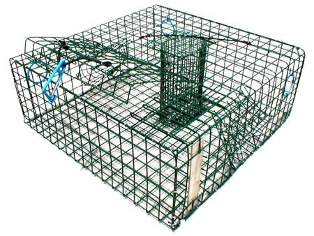 Green lobster trap with two entrance tunnels, and also black plastic netting inside.