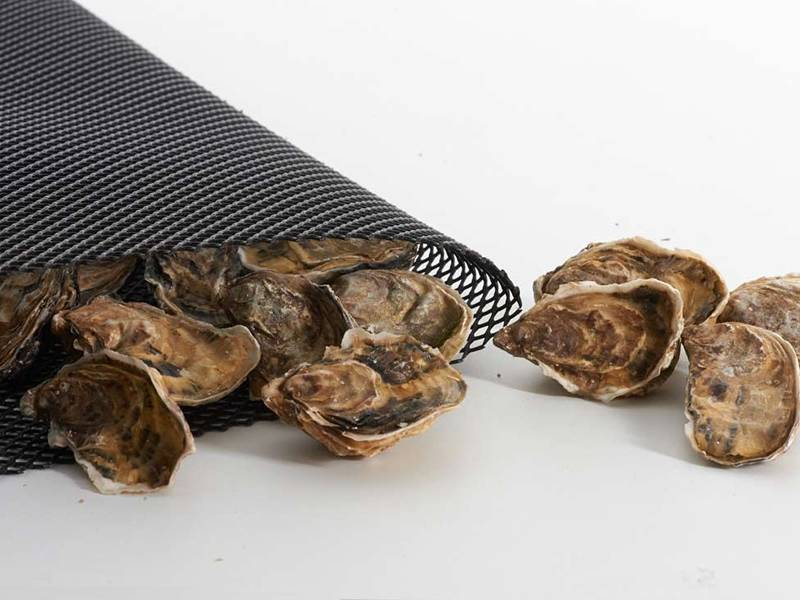 Oysters putting out from oyster mesh.