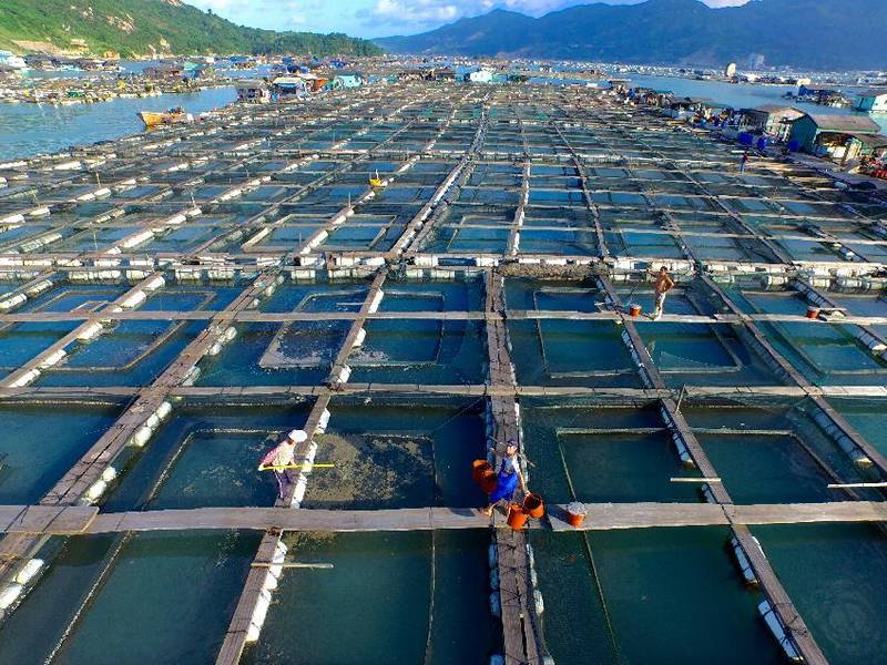 Copper Alloy Fish Cages Prevent Biofouling And Produce