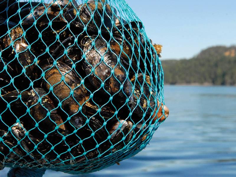 Extruded Aquaculture Netting For Deep Sea Farming
