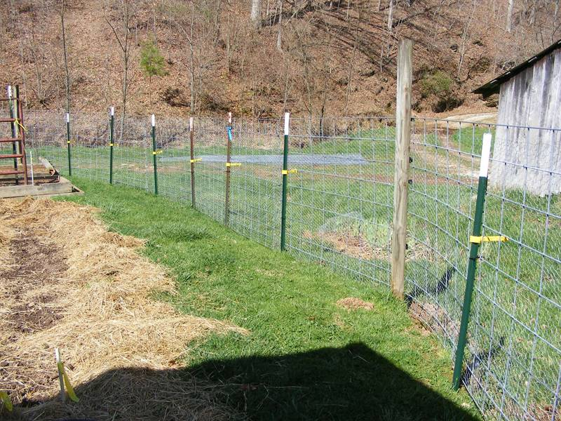 Studded T Posts For Plants Fixing And Farm Fence Supporting