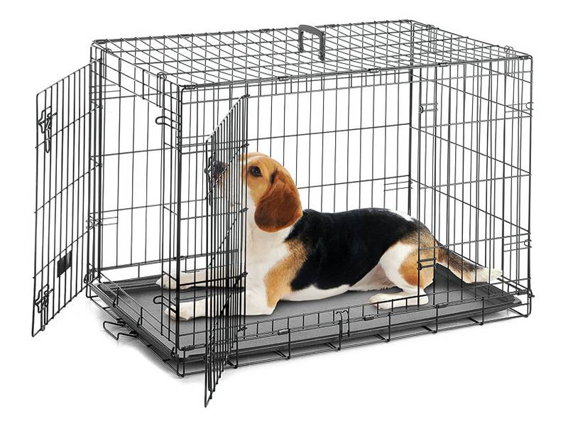 A black painted welded wire dog cage with a pretty dog in it.