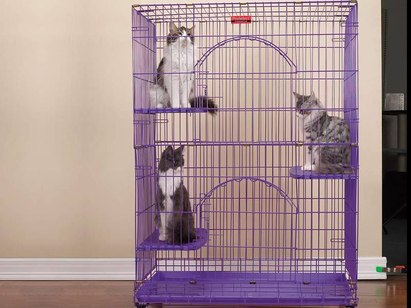 A purple cat cage is in the room with three cats sitting on the resting benches.