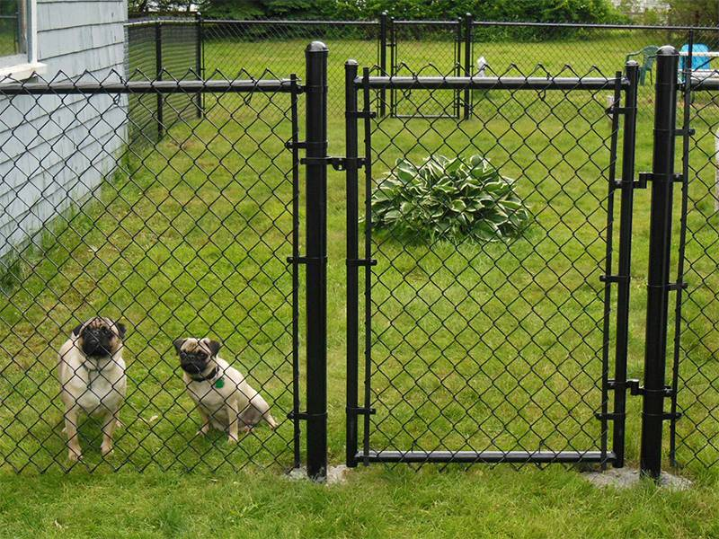 Black chain link single leaf gate applied in dog cage.