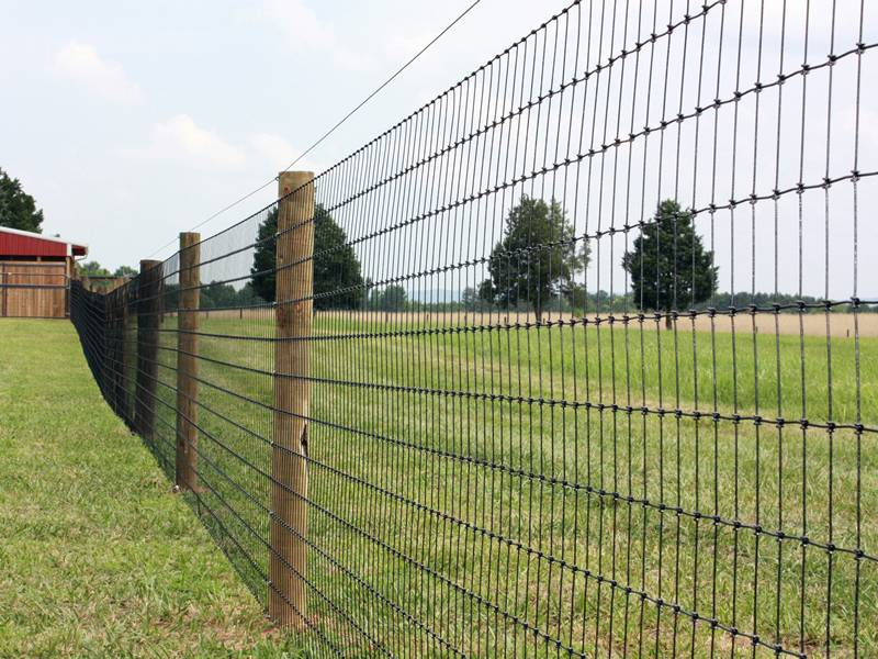 Field Fence With Various Types For Cattle Fencing In Farm
