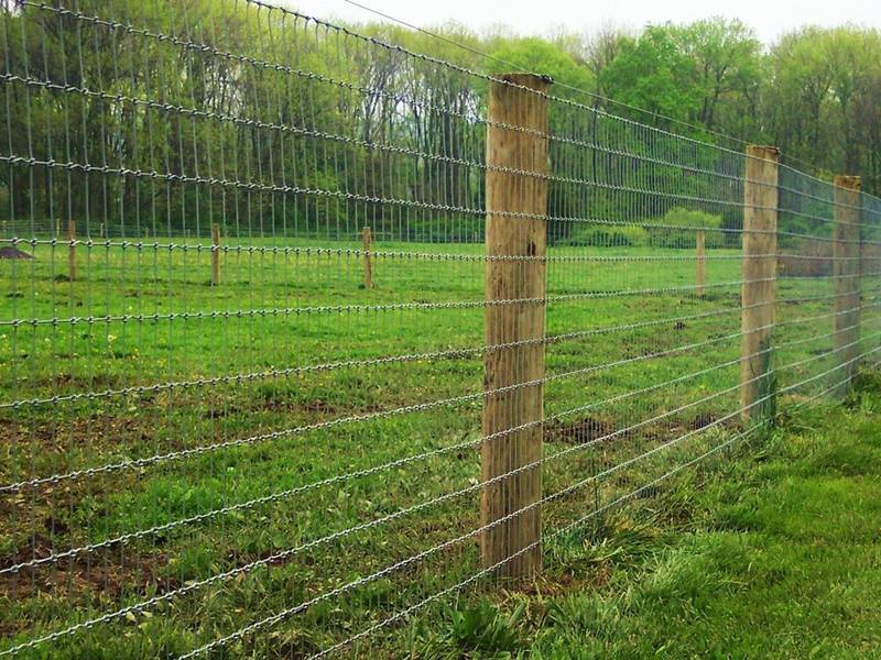 Square Deal Field Fence For Farm Pasture Forestry Road