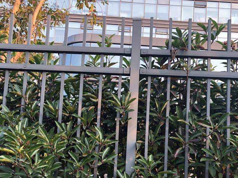 Gray galvanized steel tubular fence with flat plastic cap installed by the side of the road.