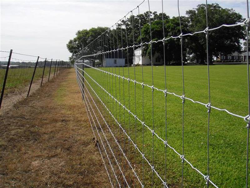 Fixed knot field fence used for grassland fencing.
