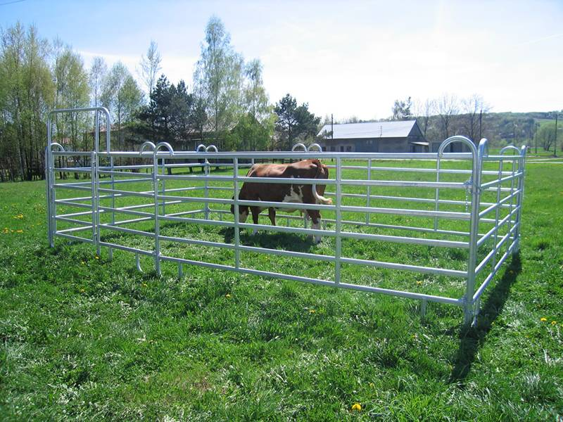 Galvanized pipe fence used for horse fencing.