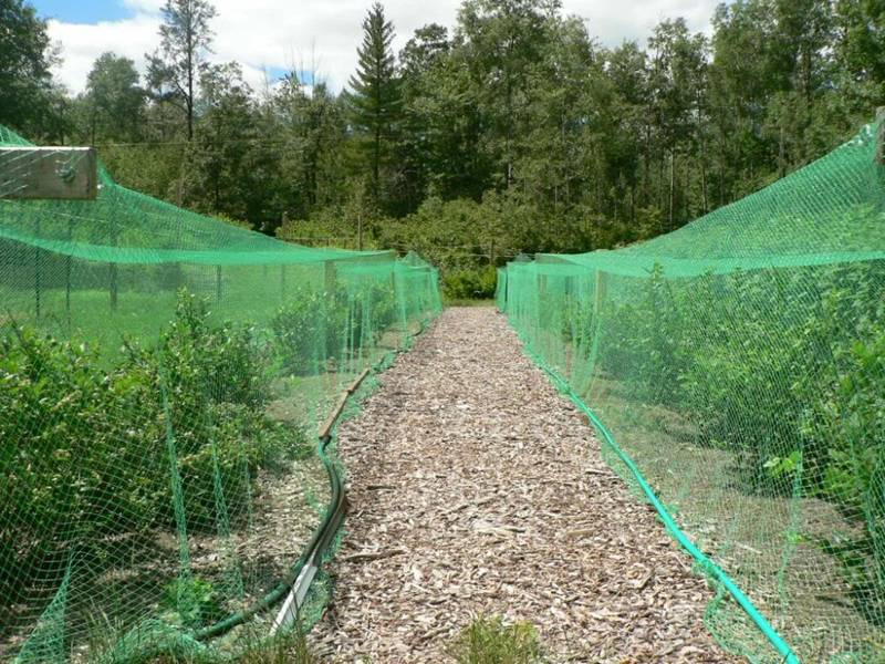 Knitted Bird Netting In Orchard/Garden Protect Seeds