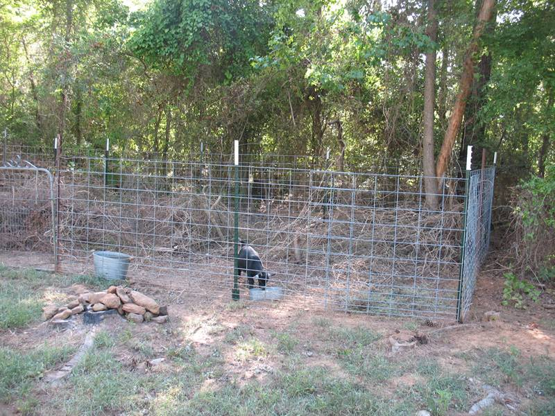 T studded posts installed with wire fence for livestock fencing and rearing.