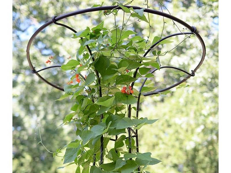 Plant Supports For Tomato Rose Strawberry In Garden