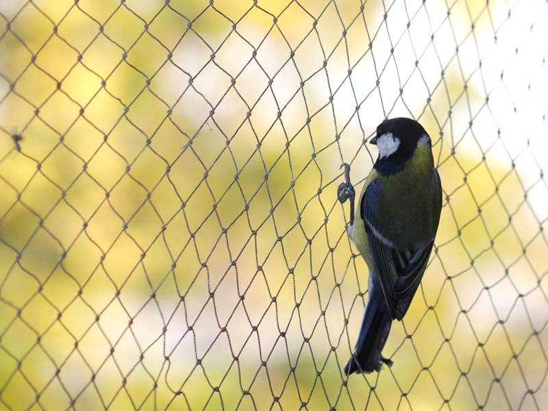 A bird is standing on the bird netting and stopped by it.