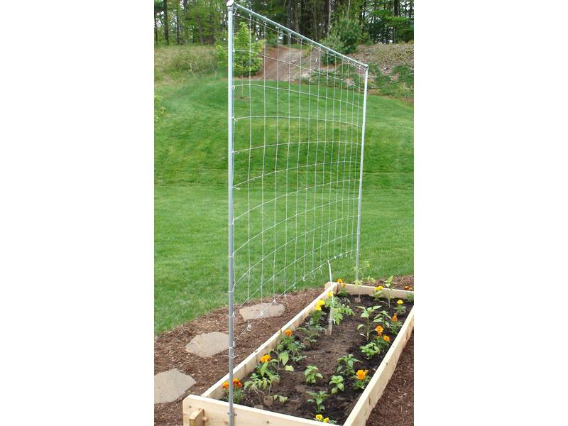 Nylon trellis netting is fastened to the metal poles and several flowers in soil.