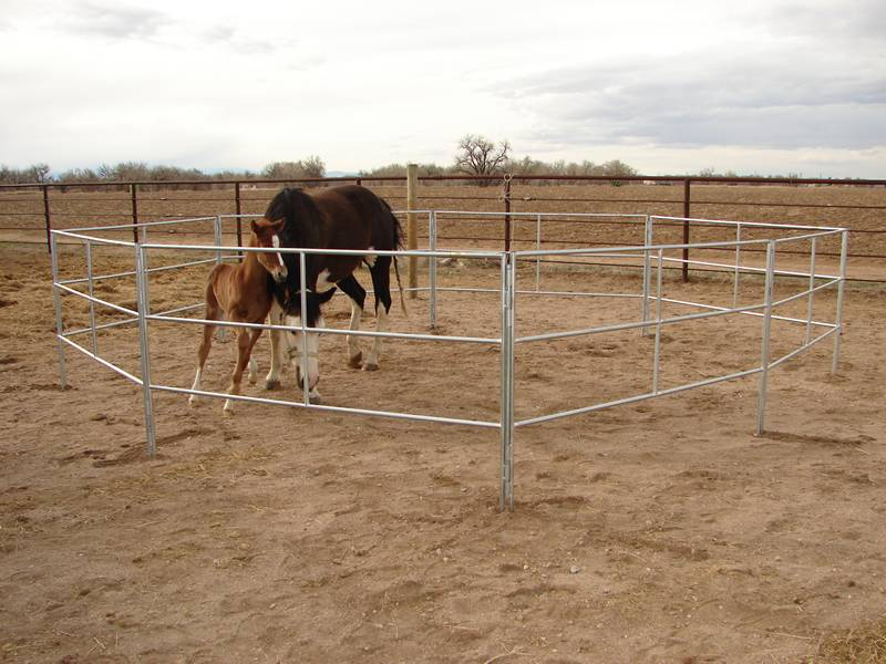 Two horses surrounded by galvanized pipe horse fence.