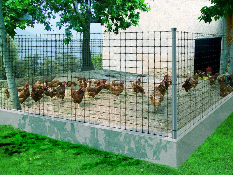 A square chicken coop with many chickens is made of plastic poultry netting.