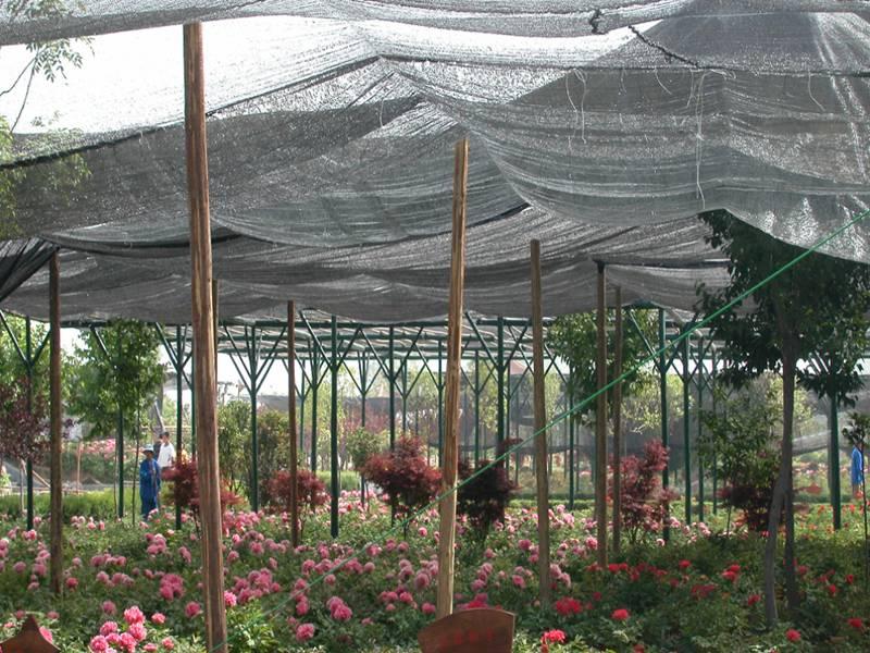 Plastic Shade Cloth Protect Greenhouse Garden