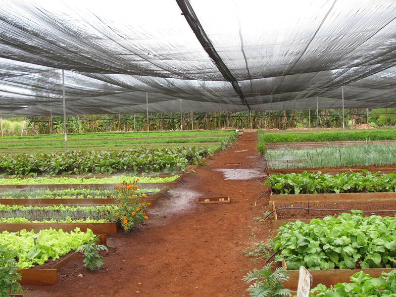 Plastic shade cloth used in the greenhouse for protecting vegetables.