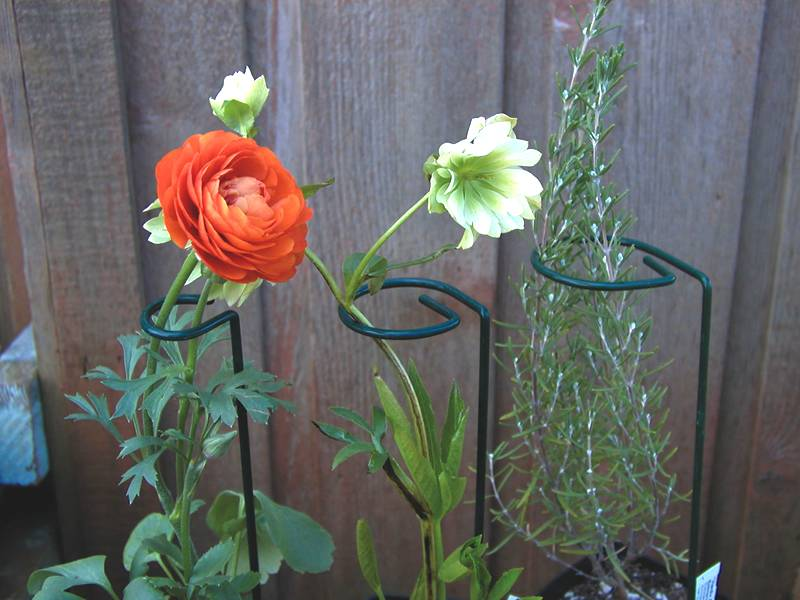 Plant Support For Peony Reineckea Herb Zantedeschia