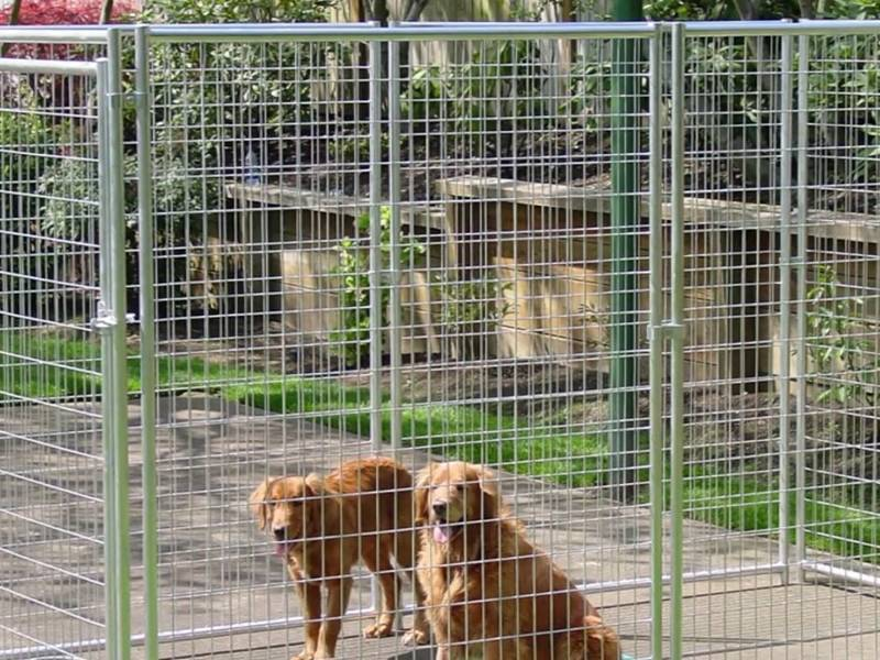 Two dogs are in the dog kennel constructed of stainless steel welded wire mesh.