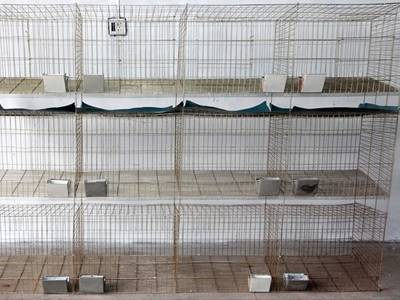 Rabbit Cage for Raising Rabbits in Poultry Farms, Indoor and