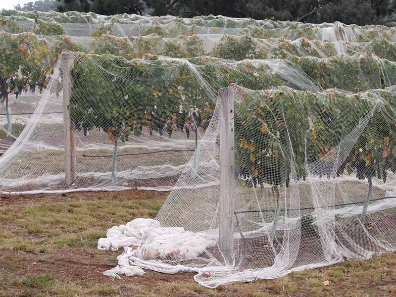 Knotted Bird Netting For Balconies Orchard Plant Nursery