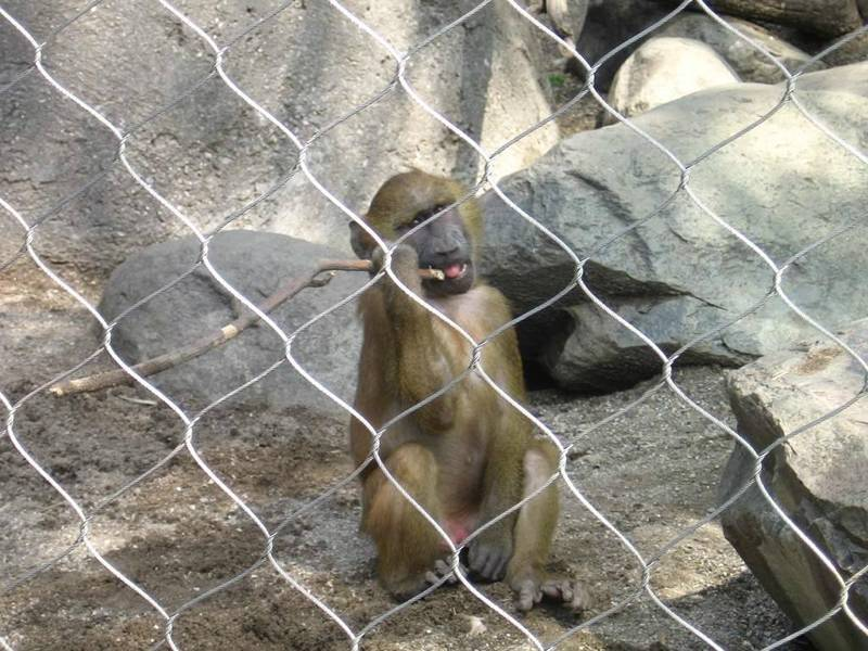 This is a monkey in the zoo with rope mesh fence.